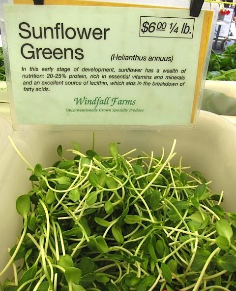Sunflower Greens