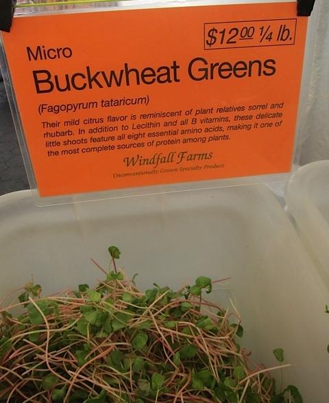 Micro Buckwheat Greens