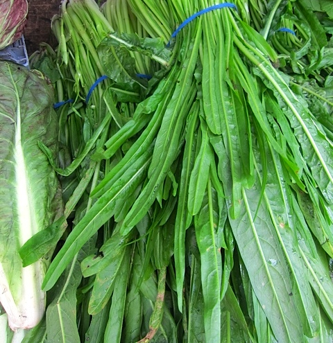 Puntarelle leaves in New York…not suggested for simple salads