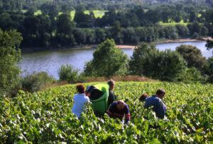 Vendanges Le Cellier Vineyard along the Loire Valley River
