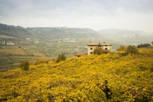 VALPOLICELLA VINEYARDS WINE ITALY PERGOLA