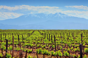Rivesaltais_Terroir_Roussillon_Wine4Food