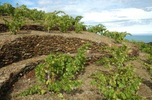 Terroir Banyuls sur Mer & Collioure_Roussillon_France_Wine4Food