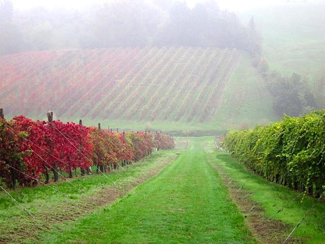 Emilia-Romagna Post Harvest