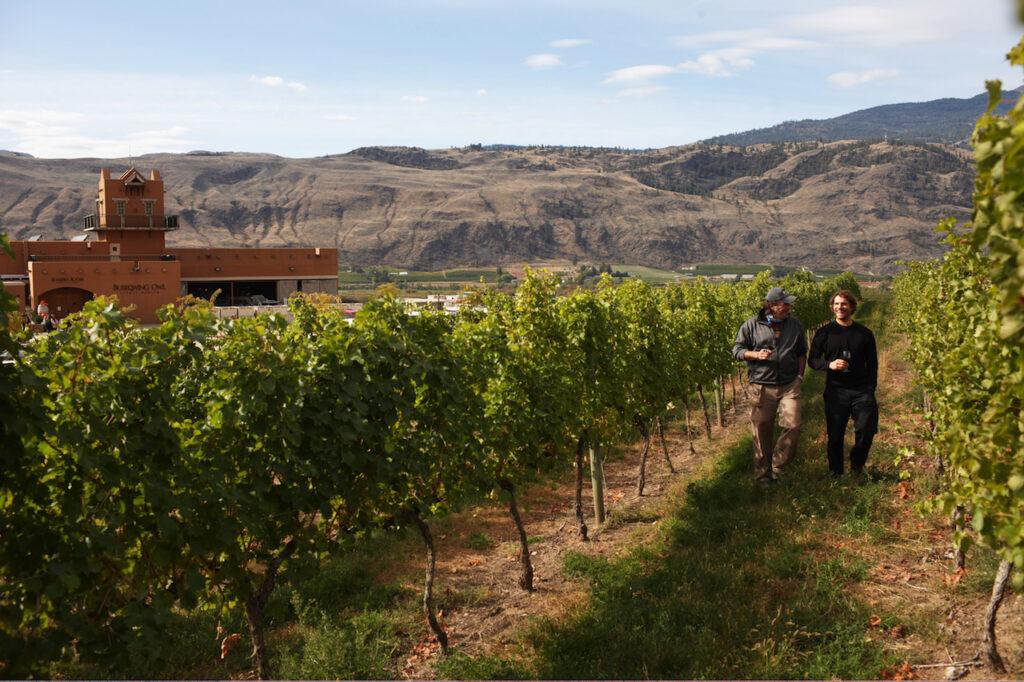 burrowing-owl-estate-winery-oliver-okanagan-valley
