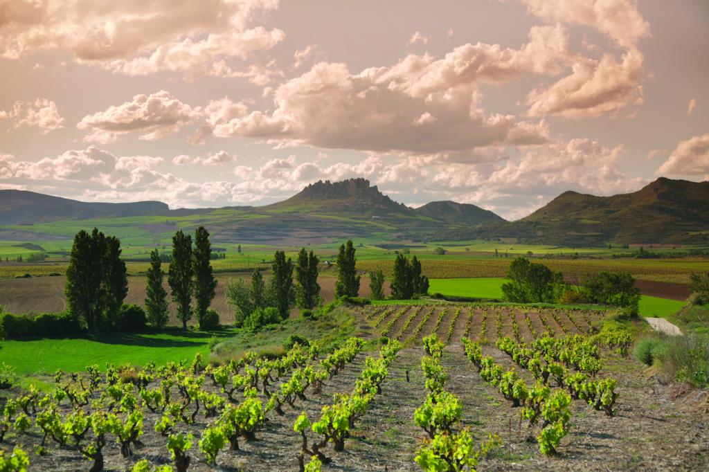 Rioja Baja