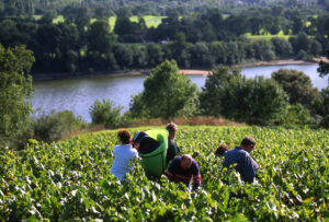 Vendanges Le Cellier Vineyard along the Loire Valley River