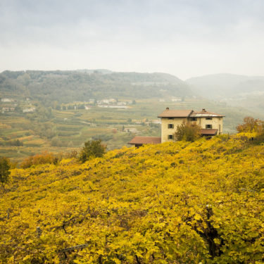 VALPOLICELLA VINEYARDS WINE ITALY