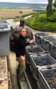 Grower_Producer_Elodie_Marion_Harvest_Grapes_Marion_Bosser_Wine4Food