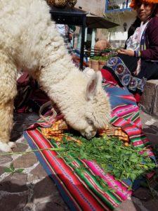 Peru Cusco San Pedro Market - Wine4Food