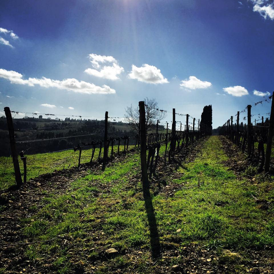 7978ed937 Sangiovese is a thin-skinned red grape with high acidity and tannins which  make it a great partner for food and lend to Sangiovese-based wines'  ability to ...